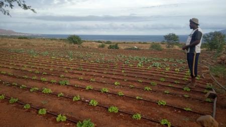 Jovens Agricultores de Casa do Meio começam a ver os resultados do seu trabalho