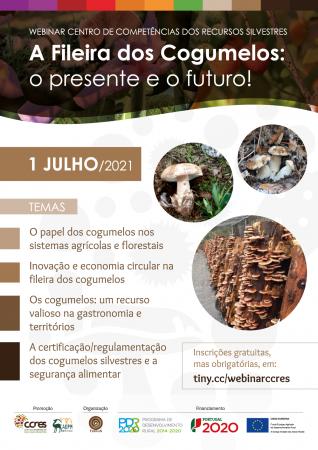 A Fileira dos Cogumelos: o Presente e o Futuro!