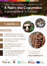 a-fileira-dos-cogumelos-o-presente-e-o-futuro