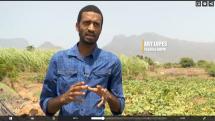programa-da-rtp-africa-destaca-projetos-na-ilha-de-santo-ant