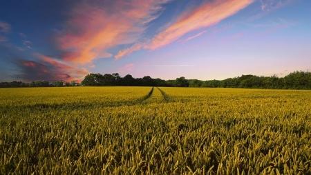 Carta Aberta à União Europeia sobre os Agricultores do Futuro