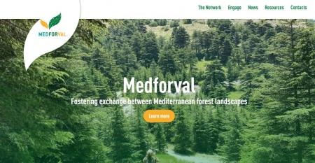 Rede Medforval lança site