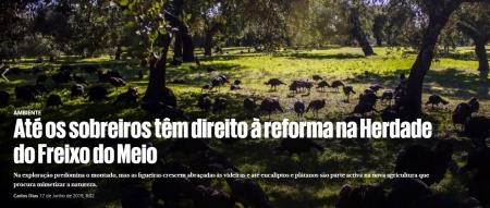 Projeto Life Montado-Adapt em destaque no jornal Público