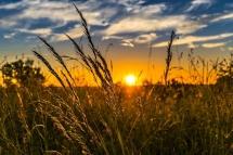 Ministério da Agricultura ignora peritos nomeados, académicos e ONGA na elaboração do Plano Estratégico da PAC e coloca em causa Pessoas e Ambiente